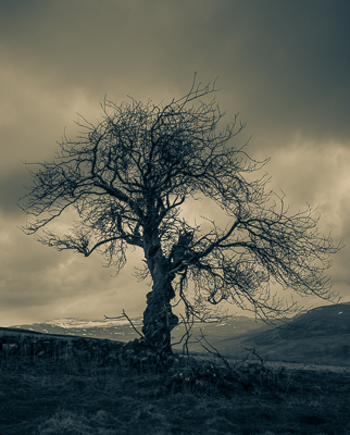 Lone tree Lycondlitch © George Logan